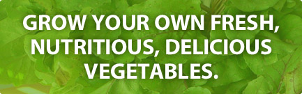 Grow your own fresh, nutritious, delicious vegetables! We will create and maintain an organic vegetable garden in your backyard or business.