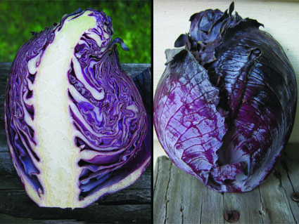 Cabbage Forming Flower Stalk