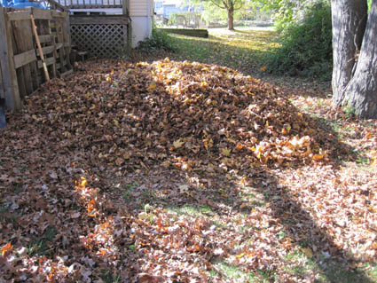 Leaf Pile Before Mowing