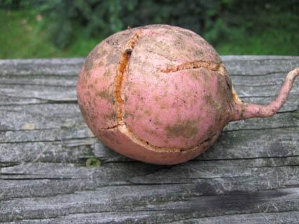 Cracked Sweet Potato