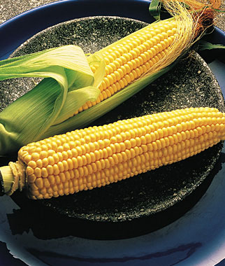 Illini Xtra-Sweet Corn: from Irradiated seed, high in sugar