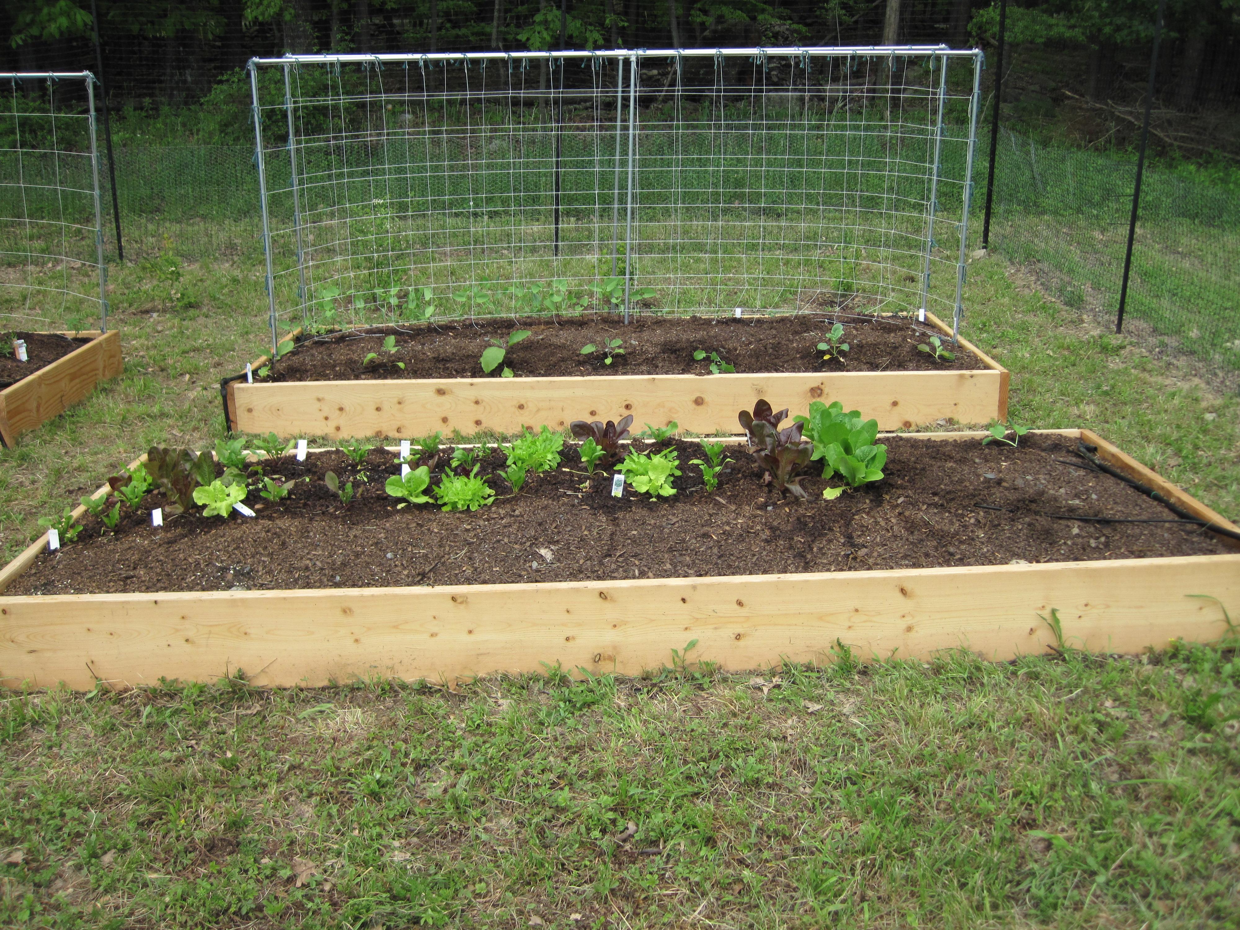 Parker Vegetable Garden 2011 171 Hudson Valley Backyard